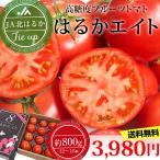 トマト はるかエイト JA北はるか 約800g 12-15個 送料無料