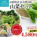 山菜 やまがたの山菜セット 5種類 6パック 山形県