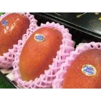 マンゴー 宮崎産 完熟マンゴー 大玉3玉入り 1.5kg 化粧箱 送料無料 贈答用 ご予約 訳あり品ではございません