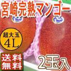 みやざき完熟宮崎マンゴー 高級 特大玉 4L2玉入り 化粧箱 贈答用 送料無料 ご予約 訳あり品ではございません