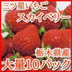 スカイベリー いちご 栃木産 大粒イチゴ 大量10パック 約320g×10パック入り 送料無料 高級果物 贈答用 ギフト 訳あり品ではございません