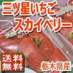 いちご スカイベリー 栃木産 大粒イチゴ 約320g×2パック入り 送料無料 高級果物 贈答用 ギフト 訳あり品ではございません