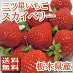 スカイベリー いちご 栃木産 大粒イチゴ 約320g×2パック入り 送料無料 高級果物 贈答用 ギフト 訳あり品ではございません