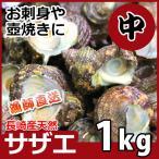 【ただいまお値打ち!】サザエ 中サイズ 計1kg 長崎産の質の高い活さざえ 天然モノをプロが厳選しました