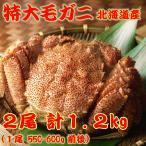 ギフト  送料無料!北海道産 特大毛ガニ 2尾詰合せ 計1.2kg前後(毛蟹)ボイル冷凍 550-600gサイズ