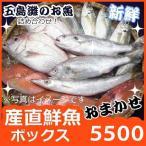 其它 - よか魚の選べる天然鮮魚ボックス5300 産直新鮮!社長イチ押し鮮魚セット!
