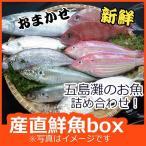 よか魚のお試し新鮮鮮魚セット!初回限定、鮮度抜群、おためし鮮魚