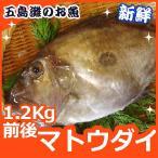 マトウダイ 1.2kg(30cm前後)1尾 新鮮だから、肝まで美味しい
