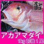 天然鮮魚アマダイ(アカアマダイ) 1kg前後1尾 長崎県産甘鯛の上質な白身がたまらない一品