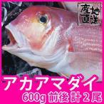 天然鮮魚アマダイ(アカアマダイ) 600g前後 計2尾 長崎県産甘鯛の上質な白身がたまらない一品