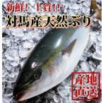 ギフト 長崎産天然ブリ(寒ブリ) 5kg前後1本 天然ぶり 一本釣りの最高級品 送料無料 #元気いただきますプロジェクト (水産物)