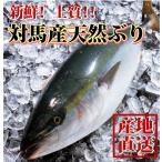 年末年始以外でのお届け分 天然ブリ(寒ブリ) 3kg前後1本 長崎産天然鰤 一本釣りの最上級品