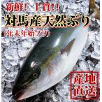 12月28日〜1月1日お届け分 天然ブリ(ハマチ) 3kg前後1本  鮮度よし!味よし! 一本釣りで水揚げされた最高級品!