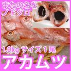 天然高級鮮魚 アカムツ(のどぐろ)   1kg前後1尾 脂の滴るとろける旨さの高級魚をご自宅で