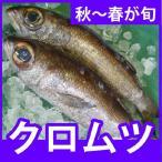 天然鮮魚クロムツ(黒ムツ) 計1.5kg前後 超高級魚をよか魚特価にて 脂ののった弾力のある身をどうぞ