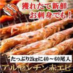 特大 生食可 アルゼンチン赤エビ お刺身 海老 エビ 40〜60尾入 2kg