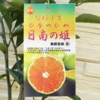 【果樹苗】日南の姫(ひなのひめ)(温州みかん) 【苗木】1年生根巻き苗【柑橘類】