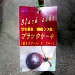 【果樹苗】いちじく【ブラックケーキ】【苗木】(別名:ヌアール・ド・カロン)【落葉果樹】