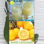 【果樹苗】スイートレモネード 2年生根巻き苗【レモン】(れもん)【苗木】【柑橘類】