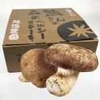 熊さんの森のヘルシーステーキ 大型椎茸8〜12入 贈答用