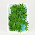 モミジの葉(緑)