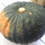栗かぼちゃ