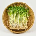 空芯菜の芽(空芯菜スプラウト)