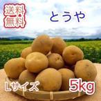 新じゃがいも < とうや >  北海道産 じゃがいも  ( L規格  5 kg)  ≪ 減農薬栽培 ≫  ≪ 農家直送 ≫  ようてい山麓ルスツ産  じゃがいも