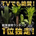 観葉植物インテリアバスケット幸福の木パキラサンセベリアオリーブバンザイサボ...