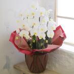 胡蝶蘭 ギフト 送料無料 鉢植え 大輪 3本立ち お祝い 開店祝い 生花 蘭 ラン らん 洋蘭 白 ホワイト プレゼント