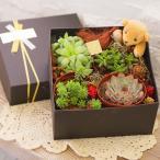 多肉植物BOXハオルチアボックスギフトインテリア多肉観葉植物オブツーサおし...