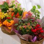 季節の寄せ鉢 旬のお花を盛り込んだ華やかな寄せ植え 送料無料 ミックス 花ギフト 観葉植物 花 おしゃれ 鉢 玄関 室内 春 夏 秋 冬