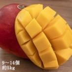 台湾産高級マンゴー 5kg  アップルマンゴー 【予約注文】5月下旬から発送予定