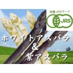 蘆筍 - 【北海道物産】【卸売市場】【北海道産】(有機栽培)ホワイト(2L500g)&パープルアスパラ(M〜2L500g)