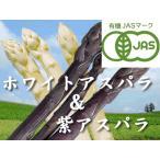 蘆筍 - 【北海道物産】【卸売市場】【北海道産】(有機栽培)ホワイト(3L500g)&パープルアスパラ(M〜2L500g)