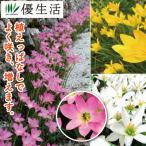 youseikatsu_11095