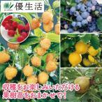 果樹苗 福袋 4種4株