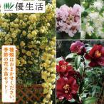 四季の花木苗 福袋 4種4株