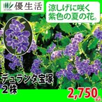 デュランタ 宝塚 2株