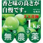 青梅大玉 和歌山・松本農園の有機JAS無農薬 1kg