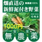 無農薬野菜詰め合わせ 旬の無農薬100%野菜セット 1000円