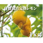 無農薬レモン・国産自然栽レモン 1kg ノーワックス 防カビ剤不使用 8個〜9個