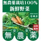 無農薬野菜詰め合わせ 旬の無農薬100%野菜セット 3000円
