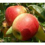 リンゴ昂林・早生富士 無農薬栽培のりんご 5kg 10月上旬発送 約20個前後 青森県「若葉農園」