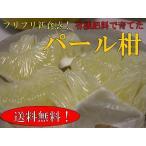 パール柑 5kg箱【12月下旬から5月】