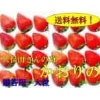 【予約】久保田さんのいちご(かおり野)   【12月下旬から2月末ころ】贈答用大粒×2トレー  産地直送
