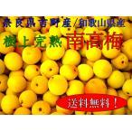 【予約】吉野の梅 樹上完熟 南高梅 5kg箱【6月下旬〜7月上旬】