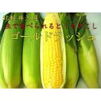 農薬不使用 とうもろこし(ゴールドラッシュ)1本 北軽井沢産【8月上旬〜8月下旬】