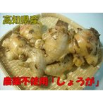 其它 - 生姜 約500g 高知産農薬不使用