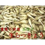 「予約」農薬不使用 生らっきょう 1kg (6月末〜7月中旬ころお届け)